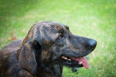 Porträthund Lizenzfreies Stockfoto