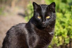 Porträtnahaufnahme der schwarzen Katze in der Natur Stockfoto