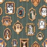 Porträts von Hunden Stockfotografie