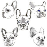 Porträtskizzenhandzeichnungssatz der französischen Bulldogge Stockbilder