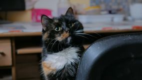 Portr?t der Katze stock video footage