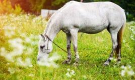Portr?t des sch?nen Pferds im Sommer lizenzfreie stockbilder
