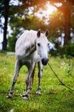 Portr?t des sch?nen Pferds im Sommer lizenzfreie stockfotos