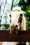 Portr?t des sch?nen Pferds im Sommer stockfotografie