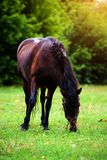 Portr?t des sch?nen Pferds im Sommer lizenzfreies stockbild