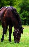 Portr?t des sch?nen Pferds im Sommer stockfotos