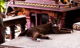 Portr?t einer braunen Katze lizenzfreie stockfotos