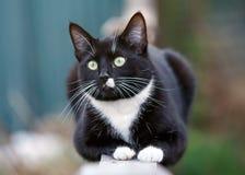 Portr?t einer Schwarzweiss-Katze, die auf Zaun sitzt stockbild