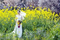 Portraint невесты с белым платьем свадьбы в поле цветка Коул Стоковое Изображение