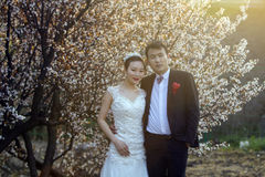 Portraint chinês do casamento dos pares na frente das flores de cerejeira Fotografia de Stock Royalty Free