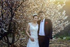 Portraint chino de la boda de los pares delante de las flores de cerezo fotografía de archivo libre de regalías