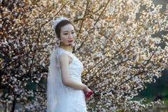Portraint de la novia con el vestido de boda blanco delante de las flores de cerezo Imagen de archivo libre de regalías