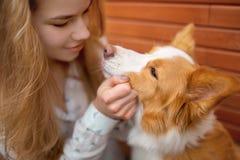 Portrair av att le den röda och vita hunden border collie för flickaomfamning royaltyfria foton