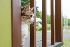 Portrair della donna del gatto distoglie lo sguardo fotografie stock libere da diritti