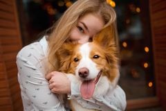 Portrair of smiling girl cuddle red and white cute dog border collie stock image