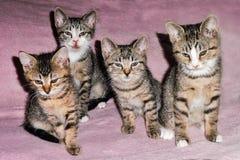 Portrait à la maison de quatre chatons Photographie stock libre de droits