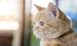 portrait égaré mignon de chat Image libre de droits