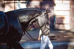 Portrait émotif d'une femelle dans l'amour avec des chevaux, animal familier frison noir de pur sang d'étalon Photo libre de droits