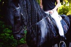 Portrait émotif d'une femme de cavalier d'amazone, animal familier frison noir de pur sang d'étalon Photos libres de droits