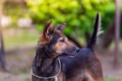Portrait étonnant de jeune chien pendant le coucher du soleil se tenant dans l'herbe dessus Photo stock