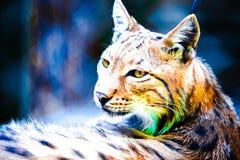 Portrait abstrait de lynx Photo stock