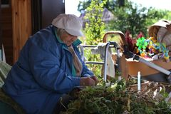 Portrait of active senior woman sorting green peas. Grandmother in a blue jacket and hat sorts green peas, harvest, on the porch of the house, next is a stroller stock photography