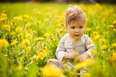 Portrait of adorable baby playing outdoor in the sunny dandelions field stock images