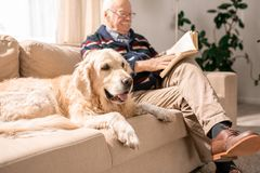 Happy Dog on Couch with Old Man stock photos