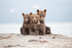 Portrait of an adorable little bears Stock Photos