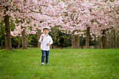 Portrait of adorable little boy in a cherry blossom tree garden, stock image