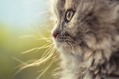 Portrait of adorable little cat defocused Royalty Free Stock Images