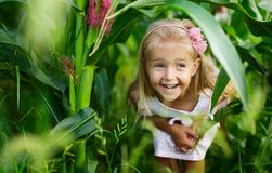Portrait of Adorable Little girl in a corn field on beautiful autumn day. Harvesting with kids. Autumn activities for children royalty free stock image