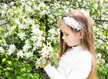 Portrait of adorable little girl holding blossom branch Stock Photography