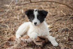Portrait of adorable mixed breed puppy Royalty Free Stock Photography