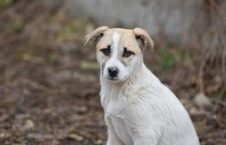 Portrait of adorable mixed breed puppy Stock Images