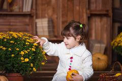 Portrait of adorable smiling girl posing with orange pumpkin in fall wooden interior. Portrait of adorable smiling girl posing with orange pumpkin in fall stock image