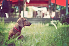 Portrait of adorable young dog in the grass. Watching something Royalty Free Stock Image