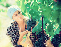 Portrait of adult female worker at grape farm stock photo