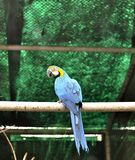 Portrait of African Macaw stock photography