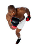 Portrait of aggressive male boxer Royalty Free Stock Images