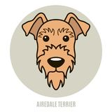 Portrait of Airedale Terrier Stock Photo