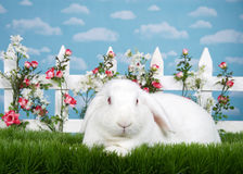 Portrait Albino Lop bunny in flower garden Stock Photography