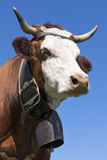 Portrait of alpine cow Royalty Free Stock Images