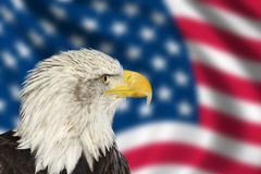 Portrait of American bald eagle against USA flag Stock Images