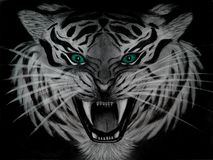 Pencil drawing of closeup of a menacing white tiger with aquamarine eyes, dangerous animal isolated on black background