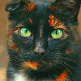 Portrait of angry spotted cat like snake. Beautiful sick multicolor cat without ear Stock Images