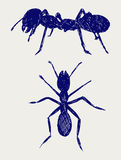 Portrait of ant. Doodle style. Vector Stock Images