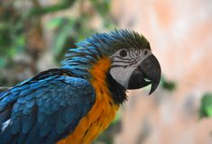 Portrait of Ara the parrot. At the zoo Royalty Free Stock Images