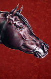 Portrait of the Arab stallion. drawing a horse's head, horse drawing dry pastel, black horse on a red background, beautiful picture, thoroughbred horse Royalty Free Stock Photos