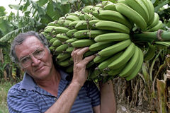 Portrait of Argentine farmer carrying banana bunch Stock Images